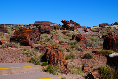 Petrified  Forest_1