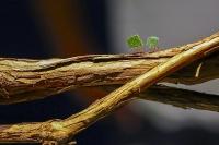 les fourmis_1