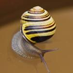 escargot tordu_1