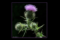 Fleurs sauvages_3