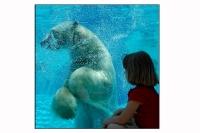 L'ours & l'enfant