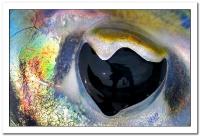 Oeil pour Oeil_1