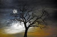 l'arbre_1
