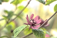 Bokeh de fleurs _1