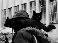 L ' homme aux chats _1