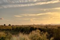 Lumière du soir sur les blés
