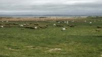 paysage irlandais_4