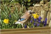 Dans mon jardin ce matin_3