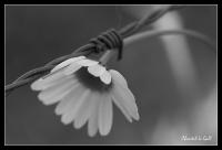 Le printemps dans le jardin_1