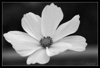 Le printemps dans le jardin_2