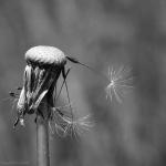 Nature en macro_2