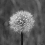Nature en macro_3