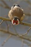 Oiseaux_1