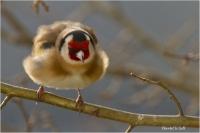 Oiseaux_2