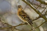 Oiseaux_3