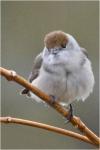 Oiseaux de mon jardin_1