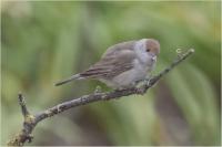 Oiseaux de mon jardin_2