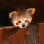 Zooparc de Trégomeur Avril 2010_1