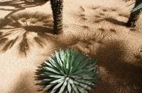 Maroc - Jardin de Majorelle_1