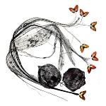 Papillonage_4
