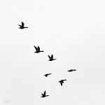 Oiseaux_21