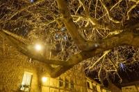 L'arbre de lumière_1