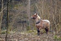 Débardage à l'aide de chevaux_6