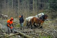 Débardage à l'aide de chevaux_7