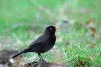 Oiseaux des jardins1