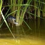 PEROU-Chasse dans la Lagune de Huacacina_1
