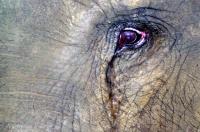 éléphants Sri Lanka_1