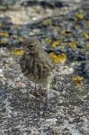 Oiseaux_4