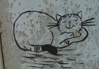 chat au mur-2_1