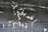 animaux oiseaux_1